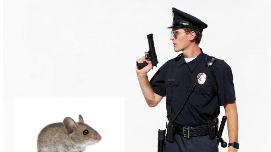 Затворници тренираха мишка да пренася дрога