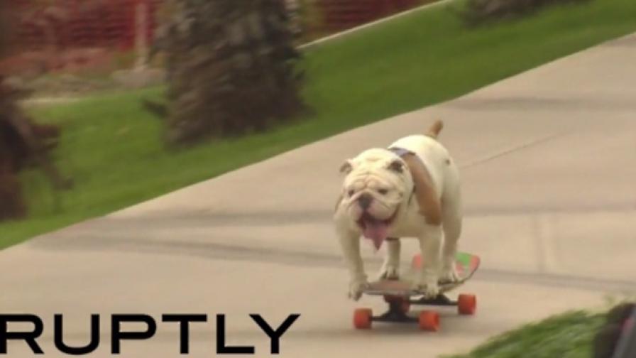 Куче скейтбордист постави световен рекорд (видео)