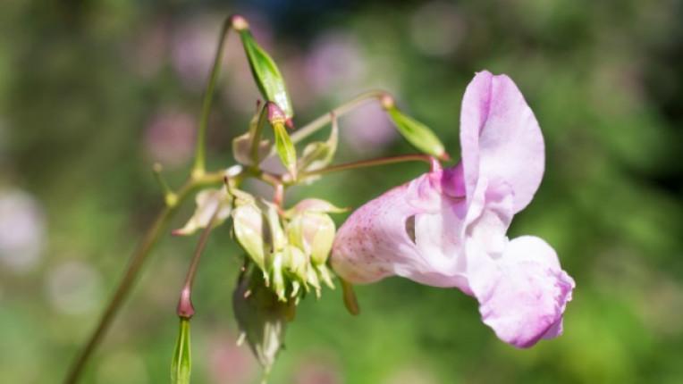 бах цветя