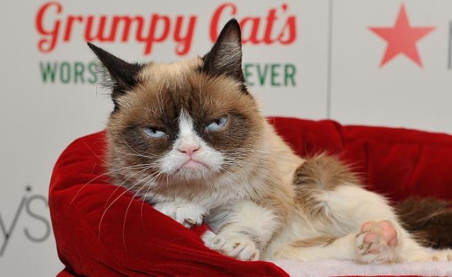 Показаха Сърдитата котка в музея на мадам Тюсо