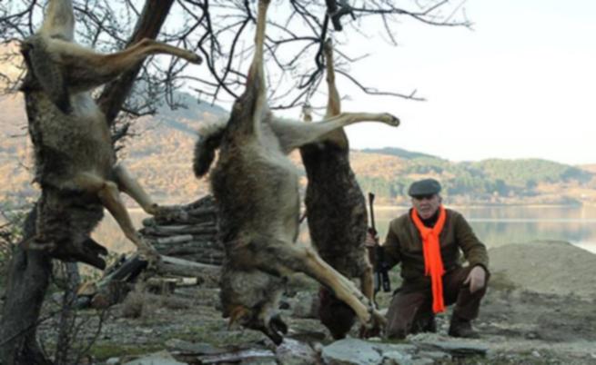 Лютви Местан и трите отстреляни вълка