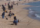 Черноморската риба и миди - по-чисти от останалите