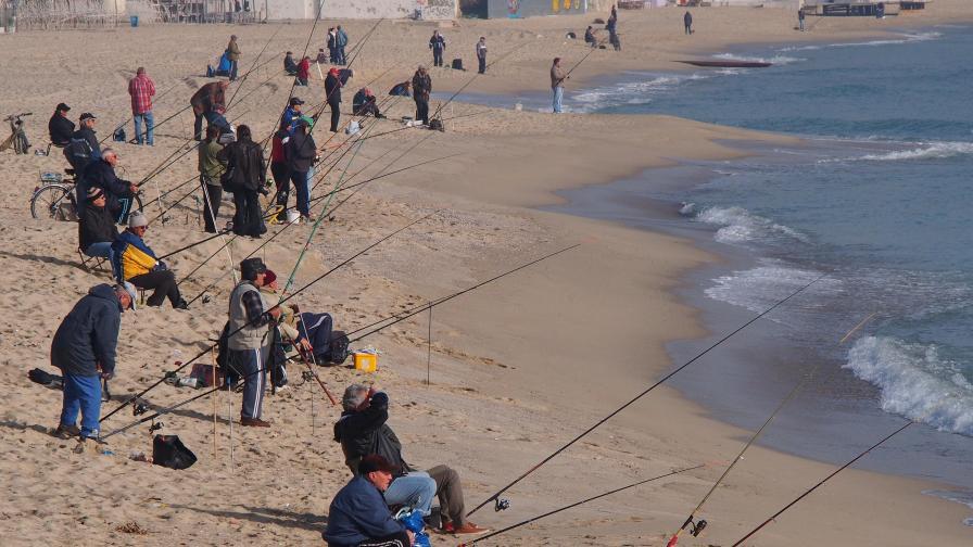 Черноморската риба и миди - по-чисти от останалите в Европа