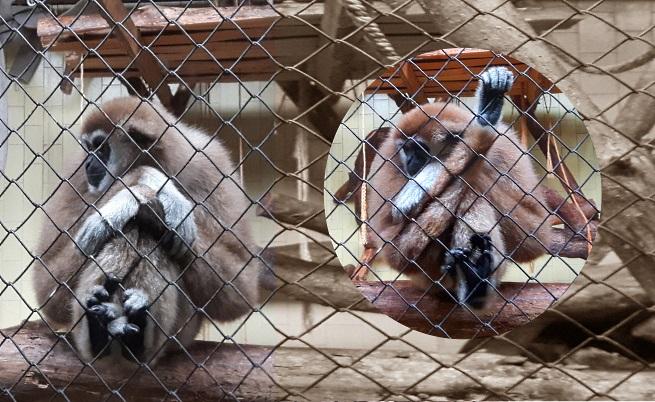 Гиби в дома си, в Софийския зоопарк.