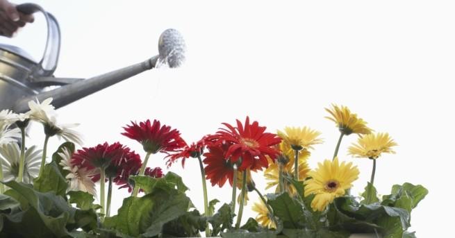 Любопитно Разбиха мита, че растения могат да пречистят въздуха в