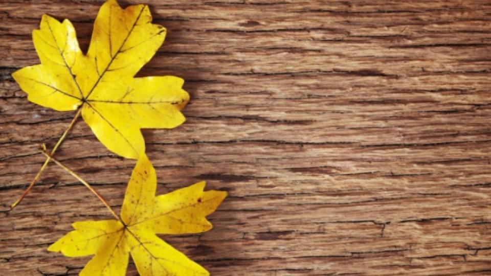 Първи признаци, че есента вече е тук