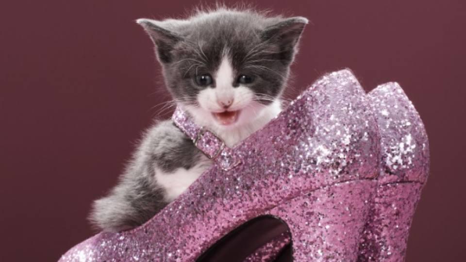 Кокетно котенце