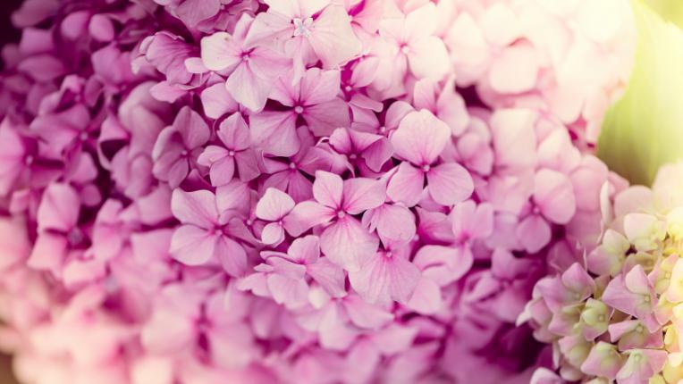 Тайният език на цветята