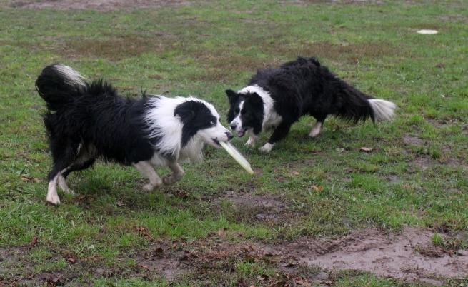 Учени разработват тест за интелигентност за кучета