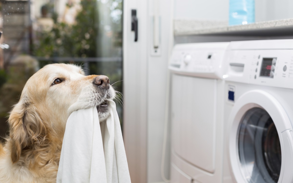 <p>Всеки ден пускат по една пералня с мръсни дрехи. Не оставят да се трупат за уикенда.</p>