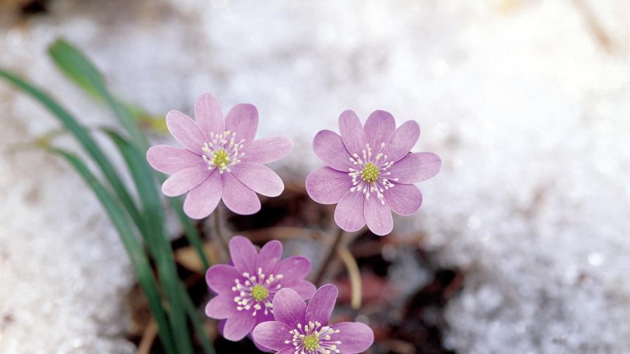 10 снимки и 5 причини защо обичаме пролетта
