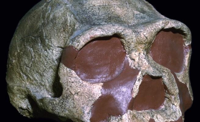 Криминална мистерия на 10 000 г. - кой уби праисторически птици