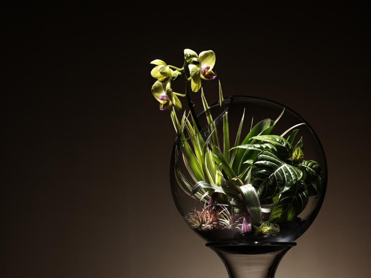 Орхидеята символизира любов и рядка красота