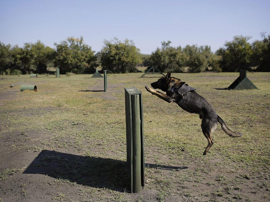 Лагерът в стил военно обучение трае три месеца, през които кучетата и водачите изграждат дълбоки лични връзки за изкуството на анти-бракониерската война.