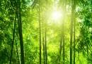 Бамбукът - строителен материал на бъдещето (видео)