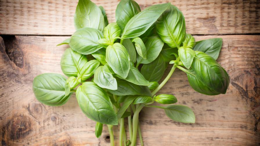 Най-полезните билки за зимата и студа навън