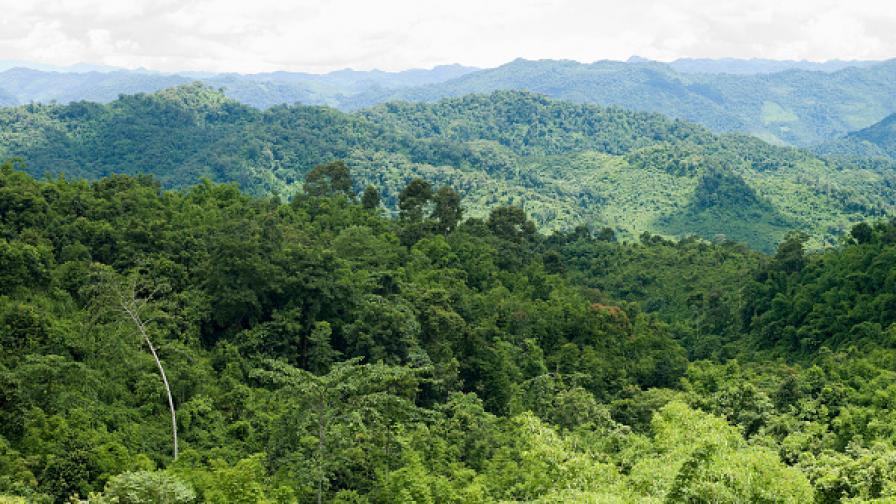 Баща и син оцеляха 40 г. в джунглата във Виетнам