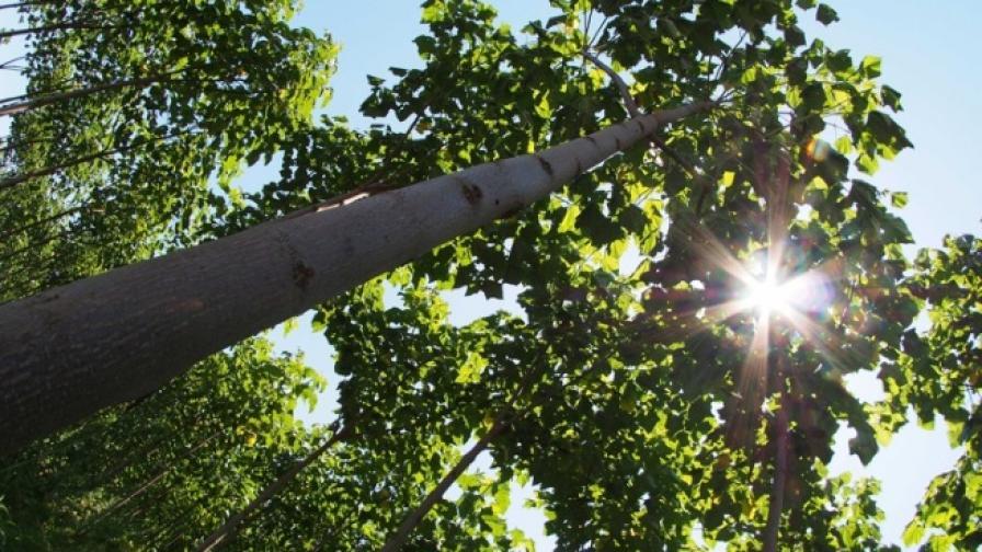 Дървото на бъдещето се намира край Балчик