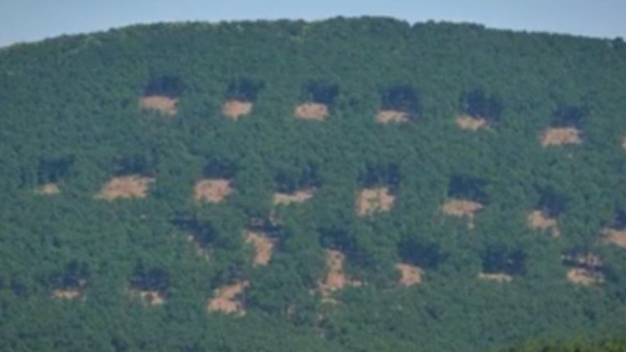 Шахматната гора планирана от общината