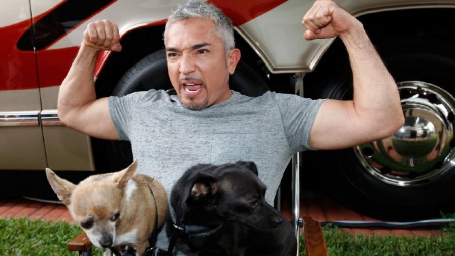 Милан: Езикът на кучетата е един и същ навсякъде