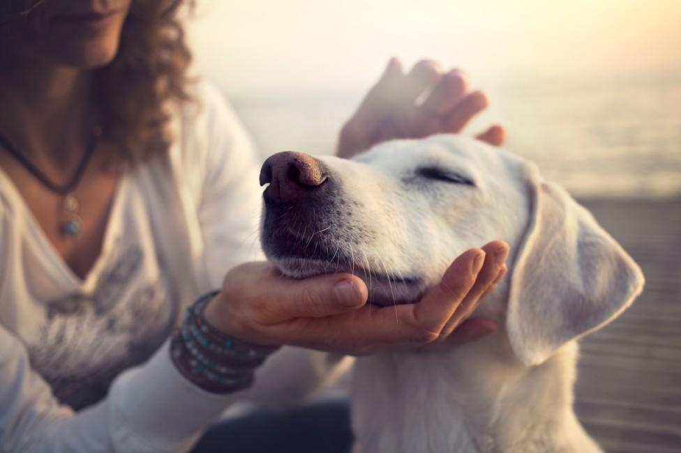 - На днешната дата - 26 август, отбелязваме Международния ден на кучето. Този празник води началото си от САЩ, а днес в много страни се организират...