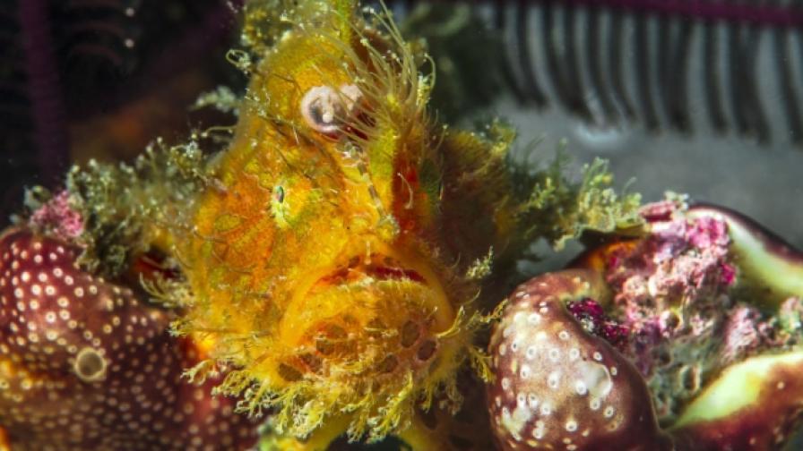 Рибата, която не може да бъде уловена с просто око