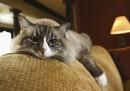 Котешкото мъркане ни лекува