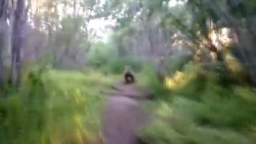 Това го има само в Русия: Мъж подгони мечки