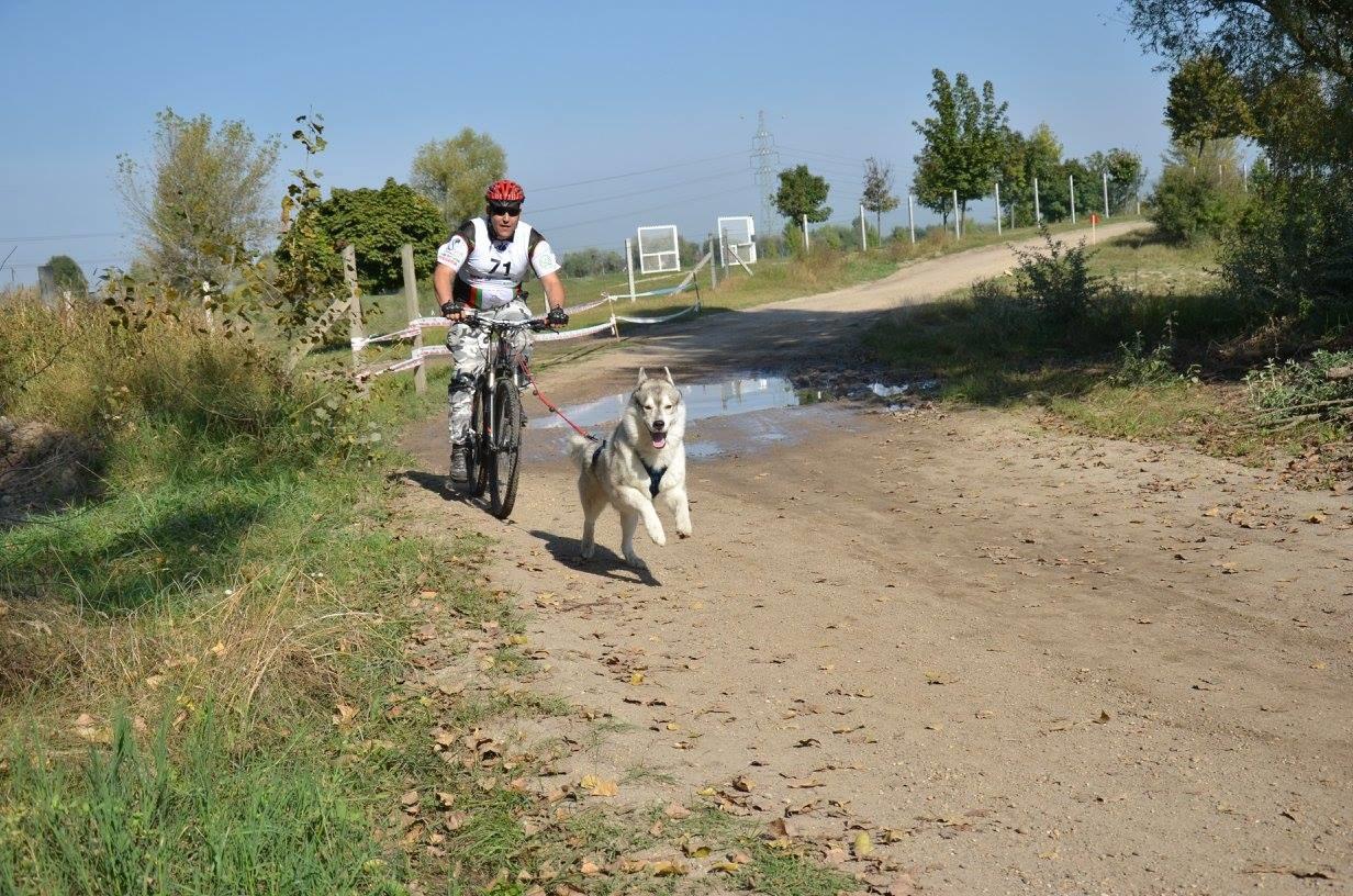 Родословни сибирски хъскита и техните стопани печелят медали за България от международни спортни състезания за впрегатни кучета. Екипите от рунтави шампиони и водачите им, които се наричат мъшери, спорят в люта битка с конкуренти от цяла Европа и успяват да извоюват престижни места за страната ни в екзотичните дисциплини като байкджориг, каникрос и скутер с кучета.