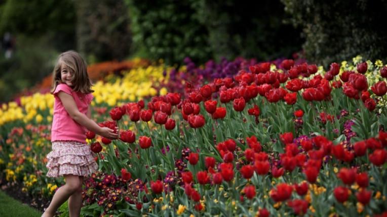 цветя флоротерапия аромати