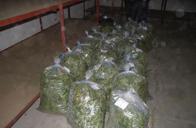 В морозильную камеру марихуану поле конопли смотреть