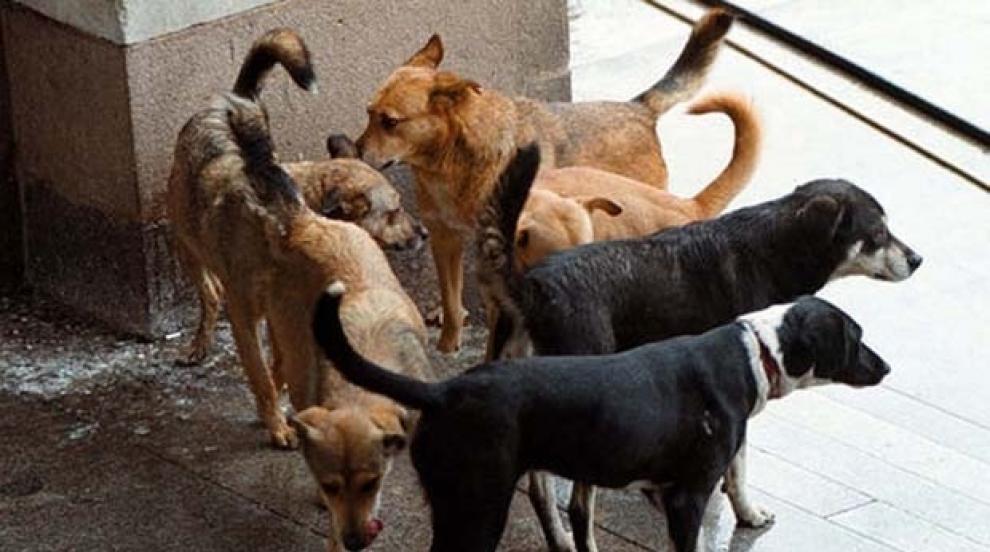 Осъдиха община заради дете, нахапано от бездомно куче