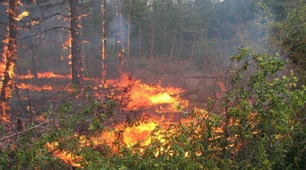 Гори пожар на голяма височина в Рила планина