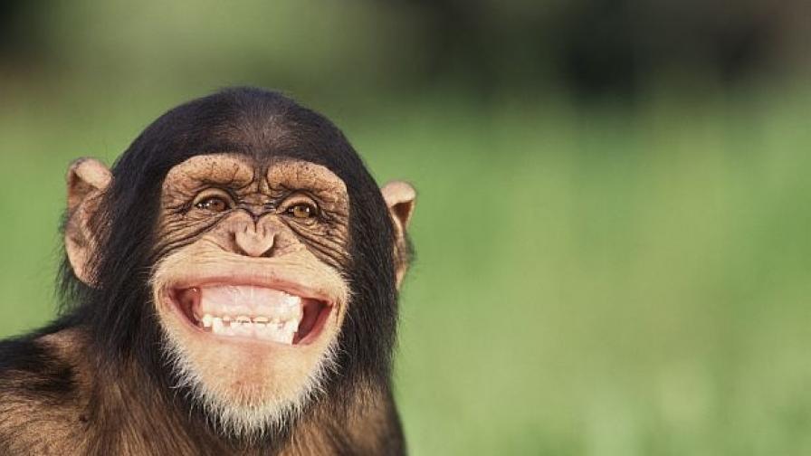 Диета удължава живота на маймуните