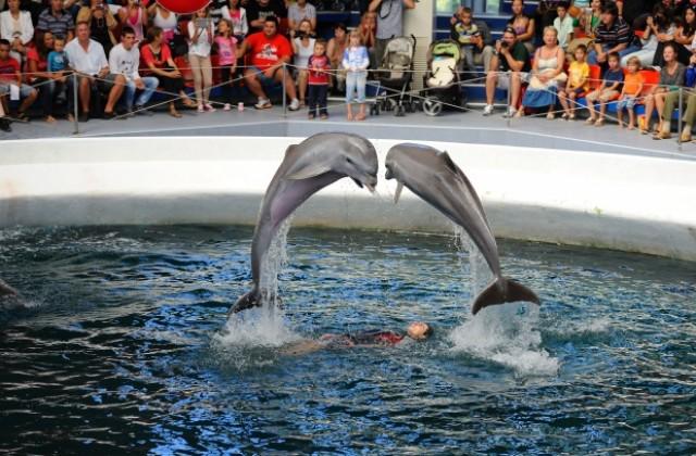 Резултат с изображение за Варненският делфинариум