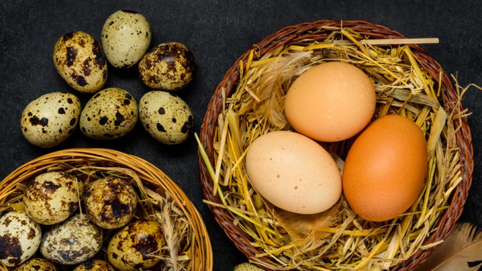 Пъдпъдъчи или кокоши яйца: за предимствата на птичите продукти говори педиатър