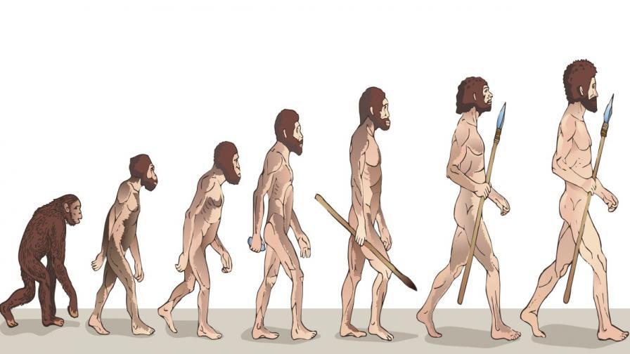 Изненадващи факти за човешката еволюция