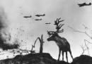 Яша - един елен на фронта в битката за Мурманск