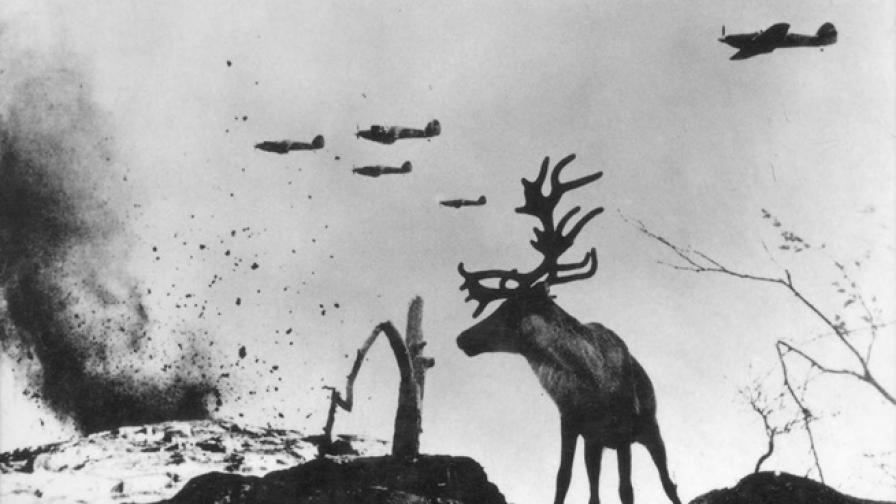 Историята на един елен на фронта в битката за Мурманск