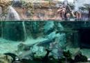 Най-впечатляващите зоологически градини в света