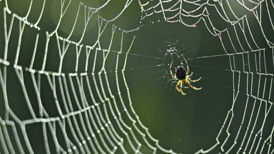 Учени откриха оса, която превръща паяците в зомбита