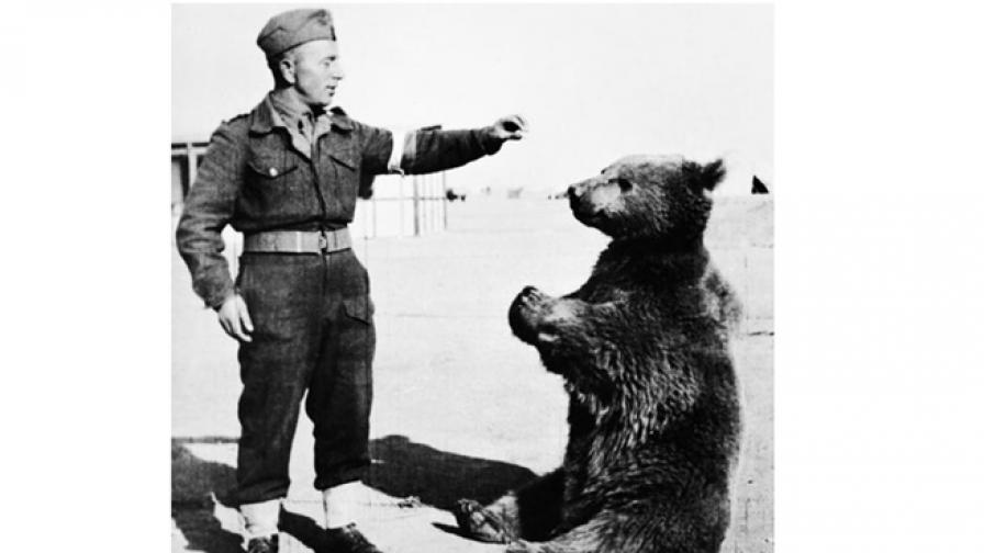 Един необичаен герой от войната - мечокът Войтек