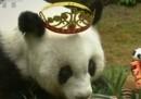 Най-старата панда в света навърши 37 години