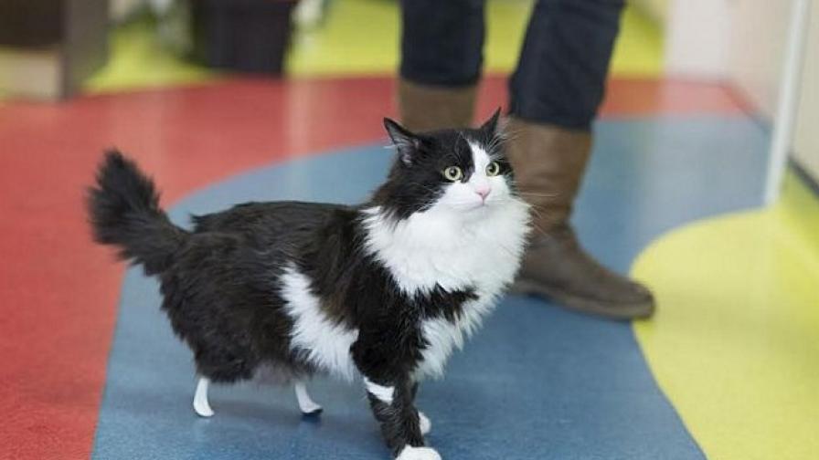 Котето Пух, което трогна с изкуствените си лапи