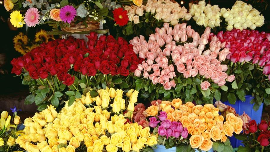 Цвете за 8 март – ще можем ли да си го позволим