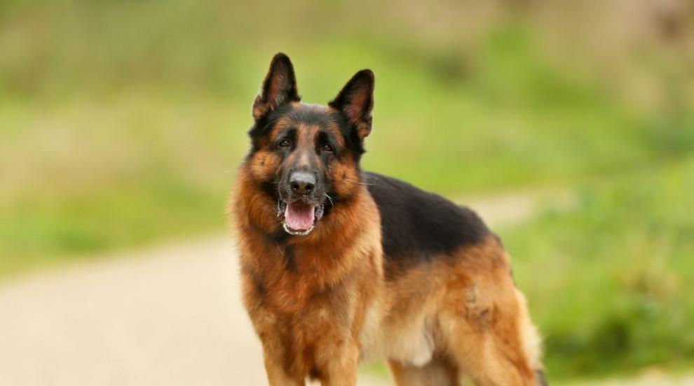 Домашно куче нападна 10-годишно дете в София (ВИДЕО)