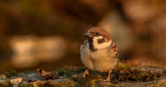 Българското дружество за защита на птиците (БДЗП) организира втора кампания