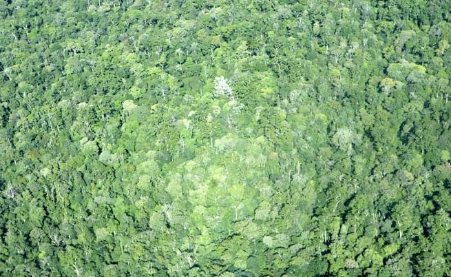 Днес отбелязваме и Международния ден на гората.