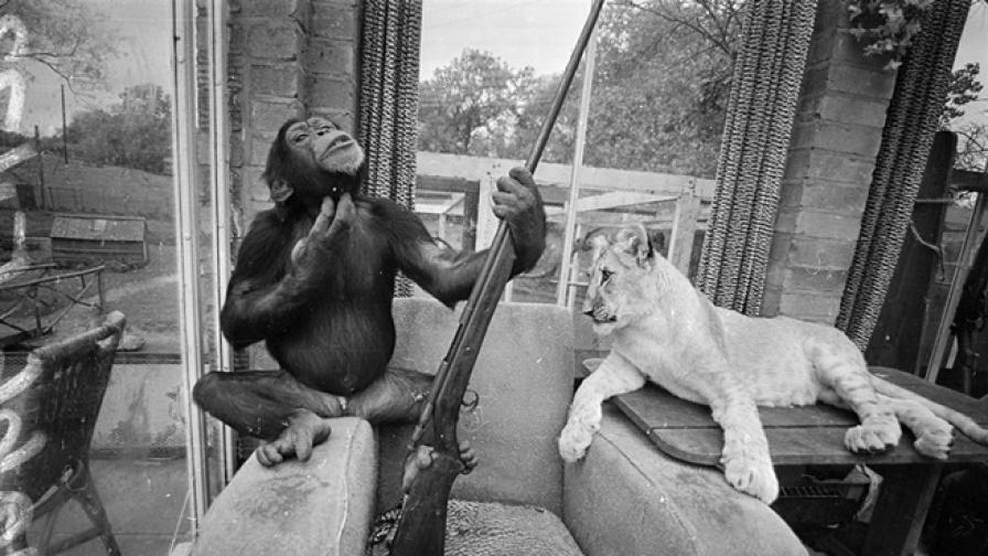 Животните, които оставиха следа в човешката история