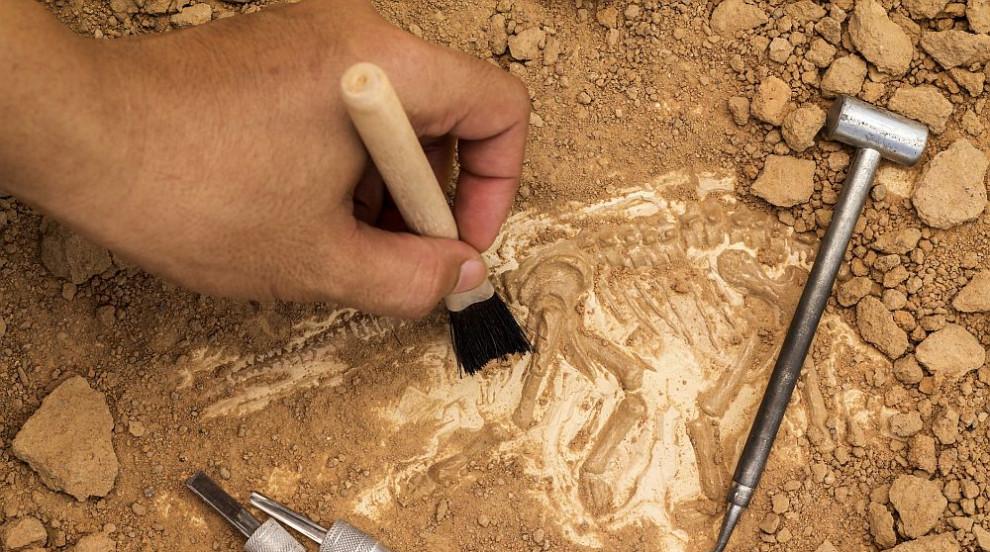 Археолози откриха кости от изчезнал вид гибони в китайска гробница
